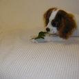 葉っぱ食べよ。